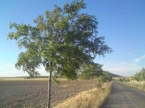 Countryside near Lillo