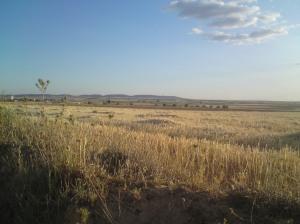 Lillo countryside