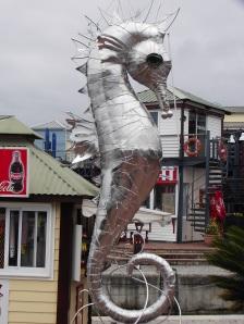 Knysna Seahorse