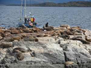 Sealions basking on the Beagle Channel