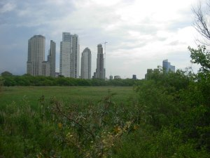 Buenos Aires skyline from the nature reserve