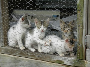 Kittens for homing