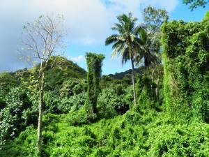 Central Rarotonga