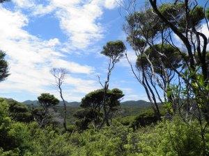 Great Barrier bushland