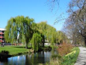 River Avon, Hagley Park