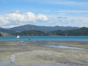 Coromandel coastline