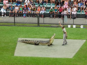 Terri baits a croc
