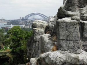 Sydney Harbour Bridge from Taronga Zoo