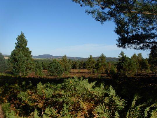Near Loch Kinnord