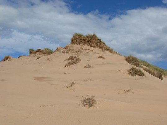 Sand dune near Newburgh