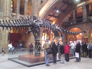 Dinosaur at Natural History Museum