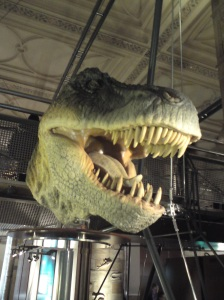 T-Rex head at Natural History Museum