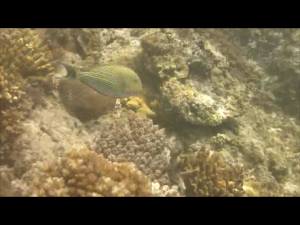 Snorkelling off Monuriki
