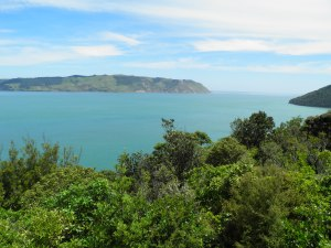 Driving through Waitakere Range National Park