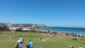A packed Bondi beach beyond the grassland