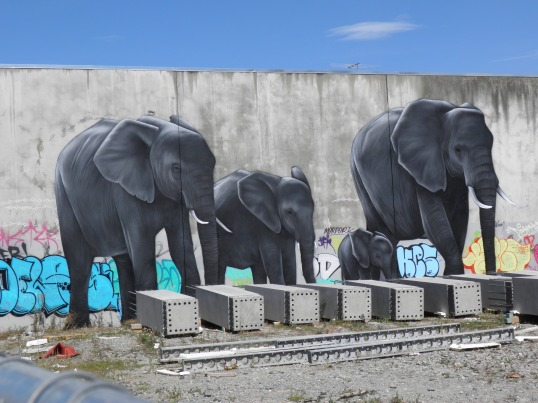 Elephants, Owen Dippie, Manchester St