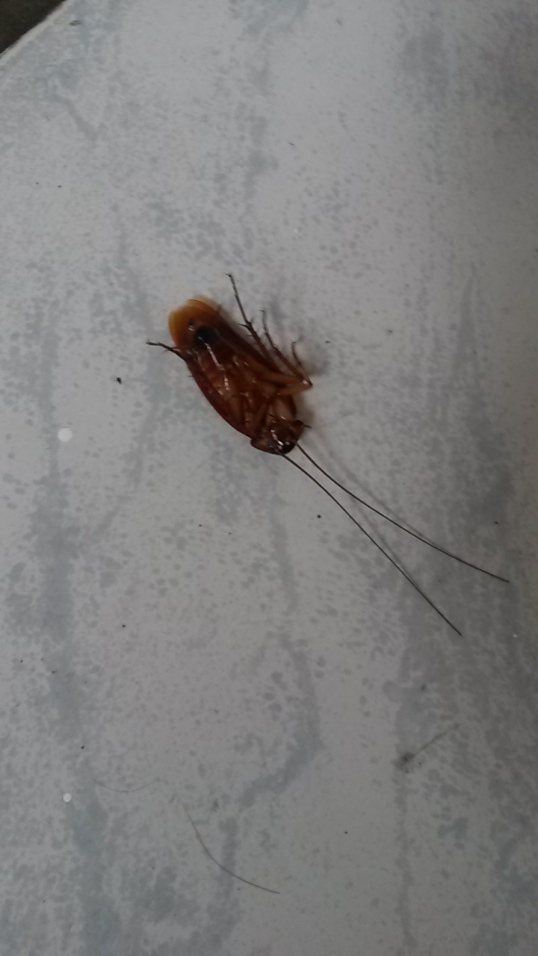 Cockroach on back