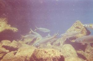 Galapagos Grunt