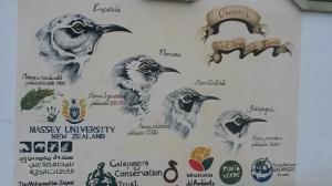 Mural in Puerto Ayora
