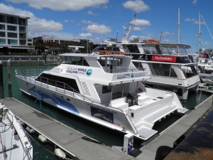 Auckland Whale & Dolphin Safari boat