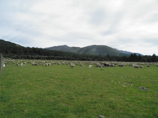 Sheep at the foot of the mountain