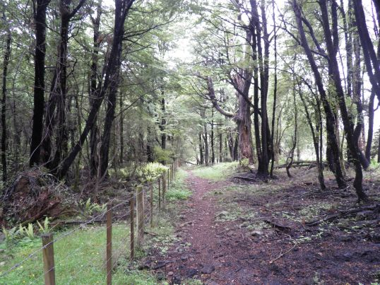 Alford Forest