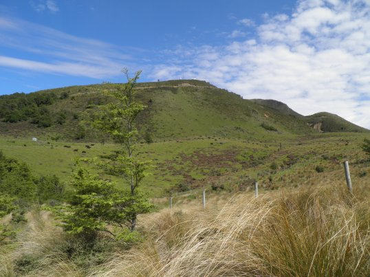 Mt Alford behind the cows