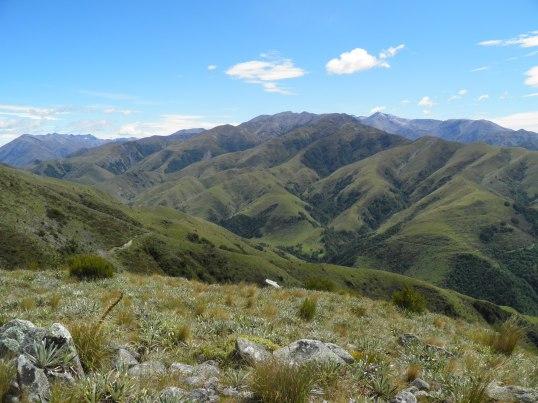 Mt Alford track