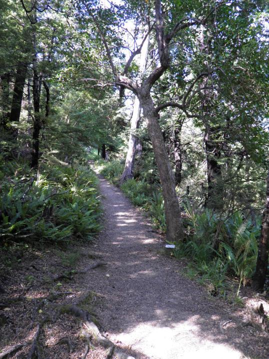 Ryde Falls track