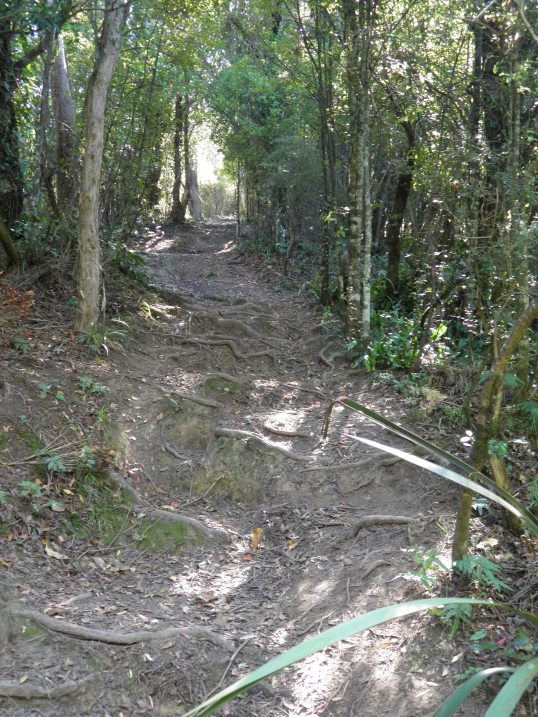 Peel Forest track