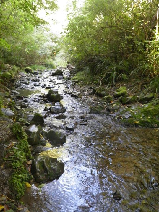 Walking up stream