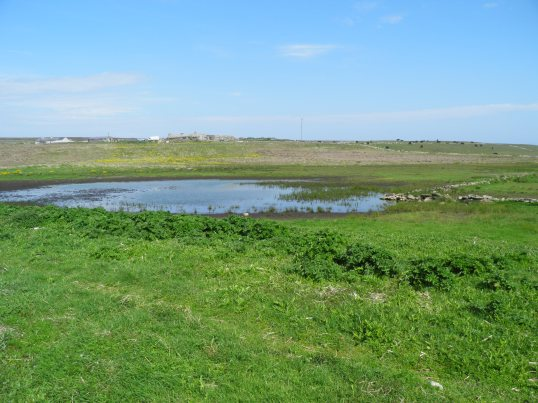 Wetland next to the farmland