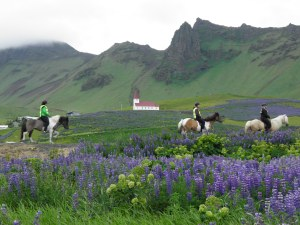 Riding Icelandic ponies at Vik
