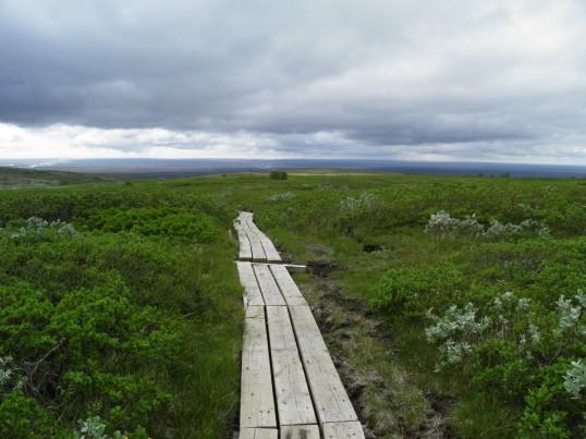 Boardwalk through the alpine vegetation