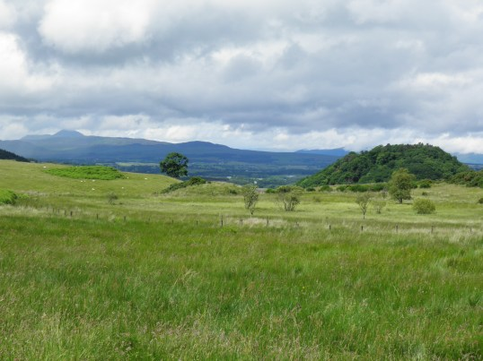 Crossing pastureland