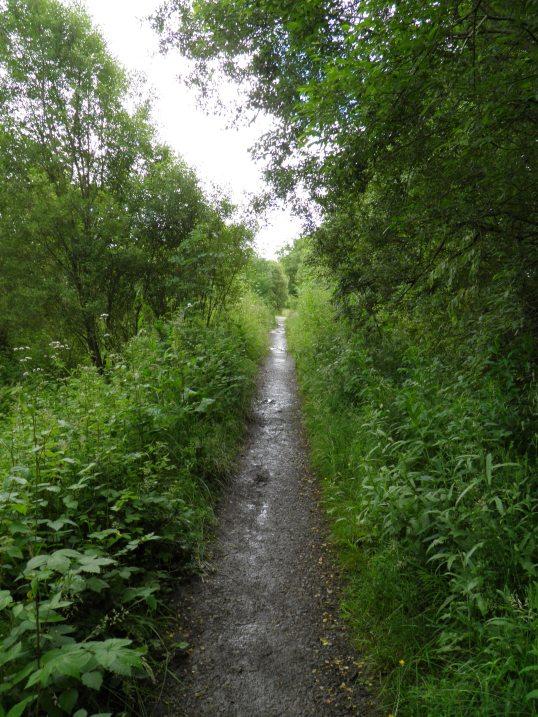 Old railway line