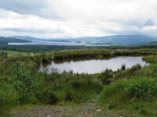 Loch Lomond behind Queen Elizabeth Forest Park
