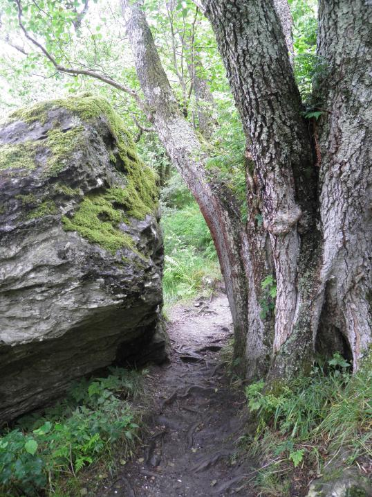 Squeezing between a boulder and a tree