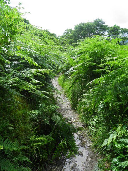 Walking through tall ferns