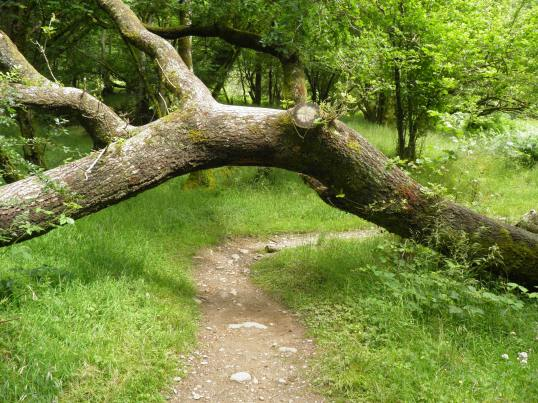 Passing under a fallen tree