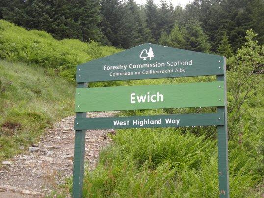 Ewich forest