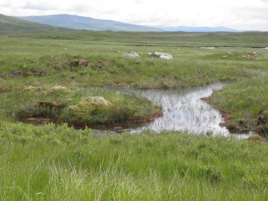 Peat bog in Rannoch Moor