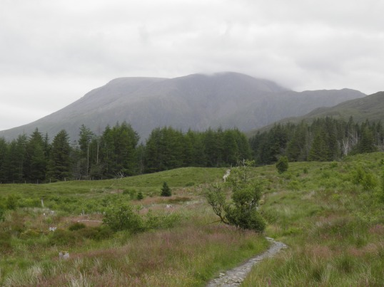 Ben Nevis visible in a clearing