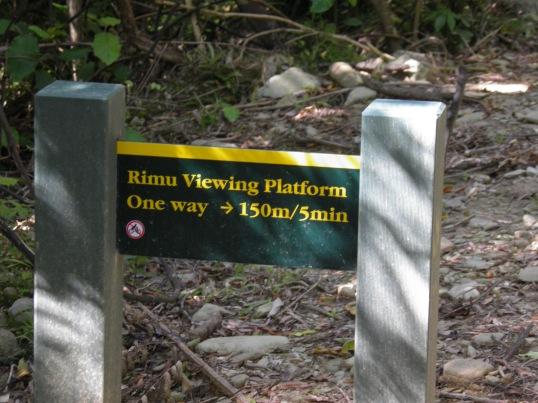 Rimu viewing platform