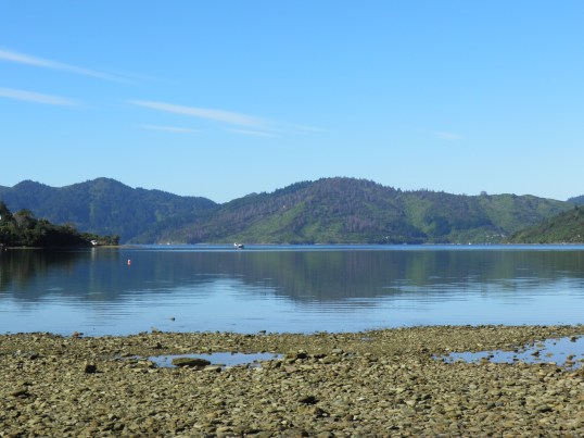 Endeavour Inlet from Furneaux Lodge