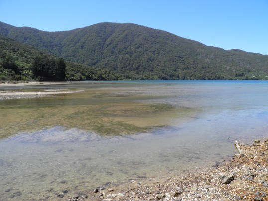 Reflections on Endeavour Inlet