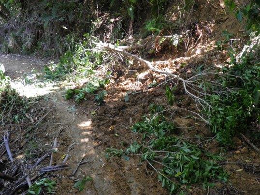 Landslide across the path