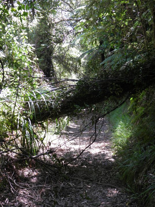 Tree fallen across the path
