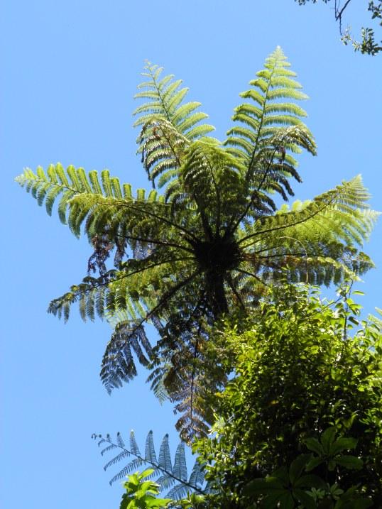 Beautiful canopy above