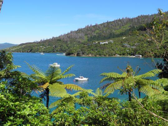 Looking across to Punga Cove